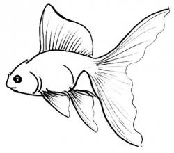 Drawn goldfish golden fish