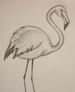 Drawn flamingo doodle