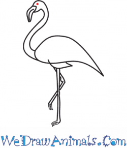 Drawn flamingo easy