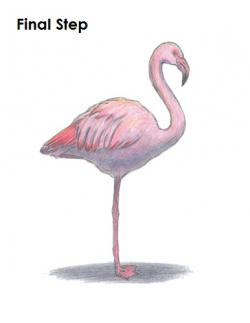 Drawn flamingo flamingo bird