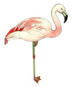 Drawn flamingo illustration