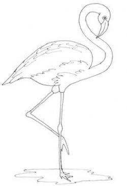 Drawn flamingo outline