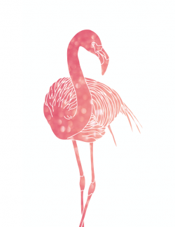 Drawn flamingo pinterest