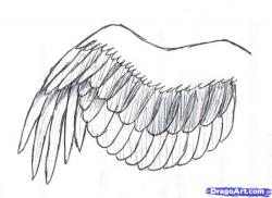 Drawn wings wing step by step