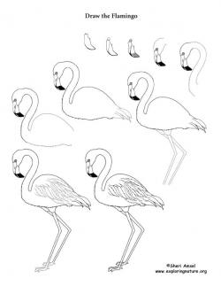 Drawn flamingo
