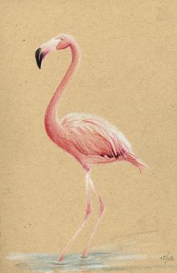 Drawn flamingo sketch