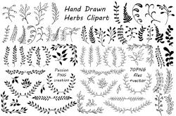 Drawn herbs clip art