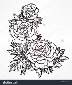 Drawn foliage rose