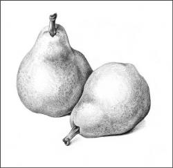 Drawn pear pencil
