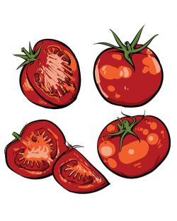 Drawn tomato vector
