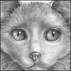 Drawn furry fluffy