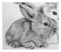 Drawn rabbit animal fur