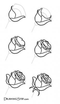 Drawn rose rose petal