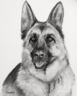 Drawn german shepherd