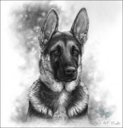 Drawn german pinscher portrait