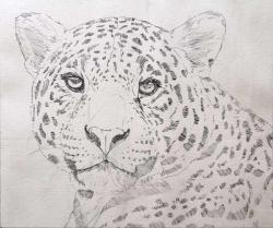 Drawn glasses jaguar