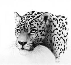 Drawn goggles jaguar