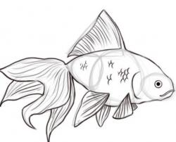 Drawn gold fish
