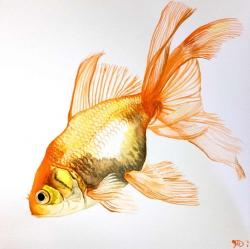 Drawn goldfish fancy goldfish