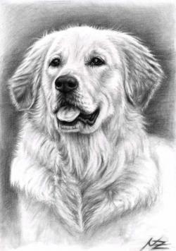 Drawn golden retriever black and white