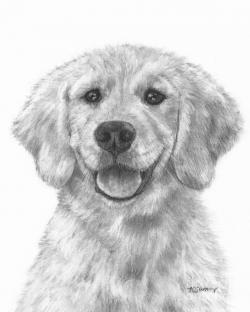 Drawn golden retriever draw a