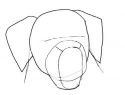 Drawn golden retriever face