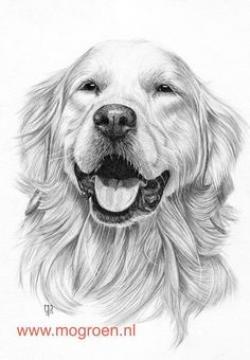 Drawn golden retriever happy friday