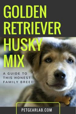 Drawn golden retriever husky