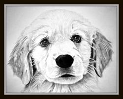 Drawn golden retriever puppie
