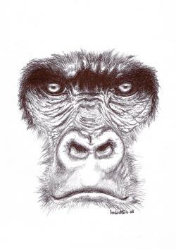 Drawn face gorilla