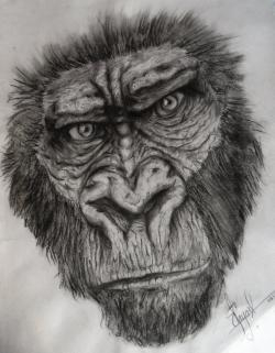 Drawn gorilla Gorilla Sketch