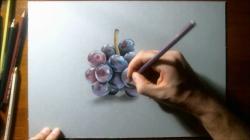 Drawn grapes pencil drawing