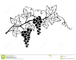 Drawn grapes branch