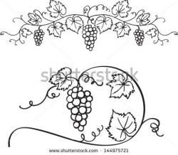 Drawn grape branch