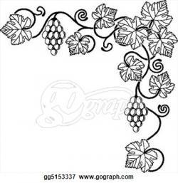 Drawn grapes grape plant