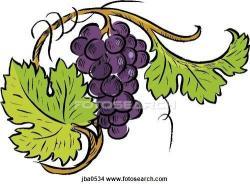 Drawn grapes grape tree