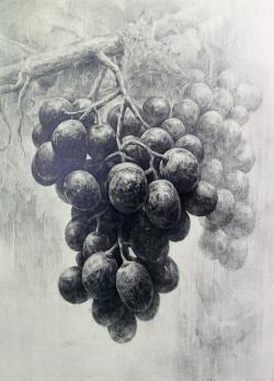 Drawn grapes pencil sketch