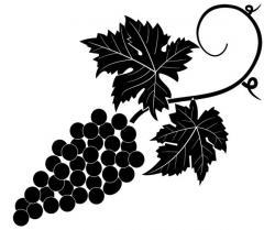 Drawn grapes vector