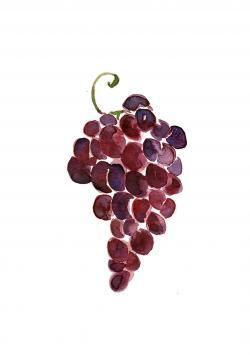 Drawn grapes watercolor painting