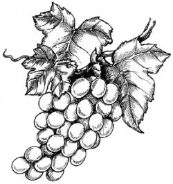 Drawn grape