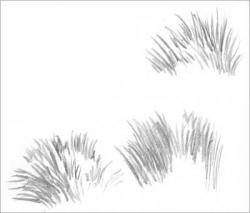 Drawn grass