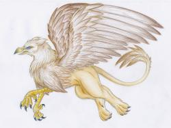 Drawn griffon mystic creatures