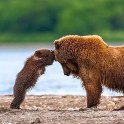 Bear Cub clipart big brother