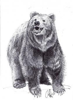 Drawn grizzly bear mouth