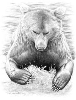 Drawn grizzly bear pencil drawing