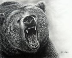 Drawn grizzly bear wallpaper
