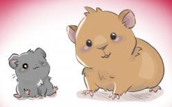 Drawn hamster chibi