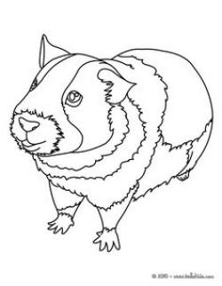 Drawn guinea pig coloring page