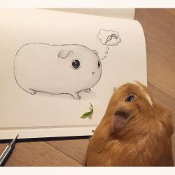 Drawn guinea pig cute cartoon