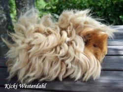 Drawn guinea pig lunkarya